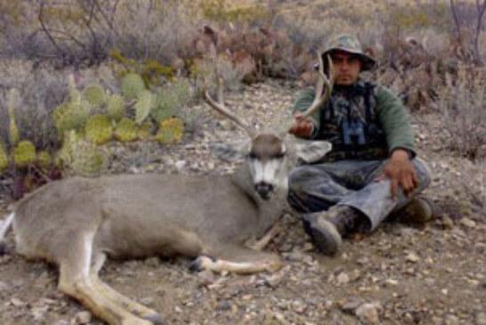 Venados Bura en Chihuahua