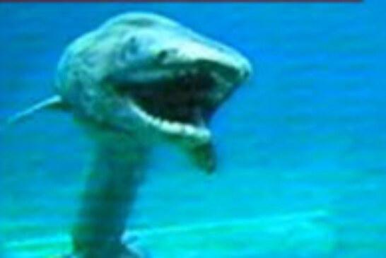 Pescadores japoneses han hallado un extraño tiburón prehistórico