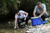 La recuperación del cangrejo autóctono navarro podría permitir su pesca en 5 años