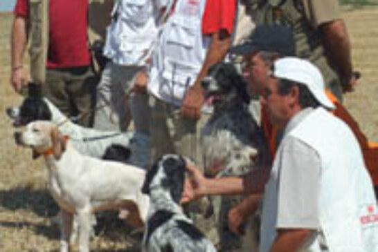 Celebrada la segunda selectiva para el Campeonato del Mundo de Perros de Muestra