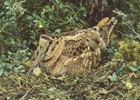 Ecologistas piden que se prohíba la caza de becadas en Gipuzkoa durante el temporal