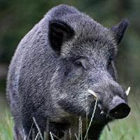 La Federación de Bizkaia ya tiene sus propuestas de cara al próximo consejo de caza