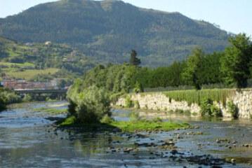 Se recupera la entrada de salmón atlántico en los ríos Oria y Urumea