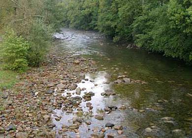 Un vertido de purines en el río Carranza contamina las aguas del Asón