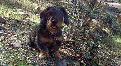 La Mesa Extremeña de la caza condena el maltrato y abandono de perros y pide la aplicación contundente de la actual normativa