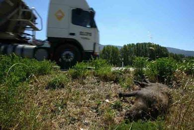 Accidentes con especies de caza, ¿de quién es la culpa?