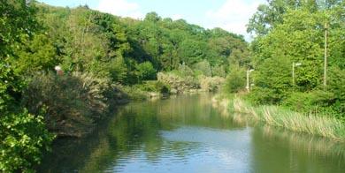 Mejora la densidad de la trucha y la entrada del salmón en los ríos de Gipuzkoa