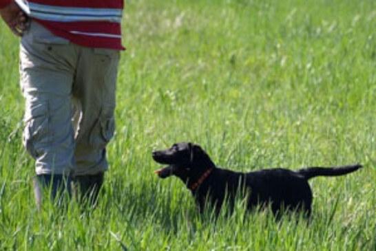 Se abre el plazo de inscripción para el Curso Integral del Perro