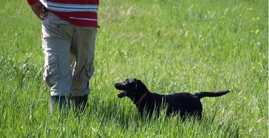 Cómo preparar a nuestros perros para la temporada de caza