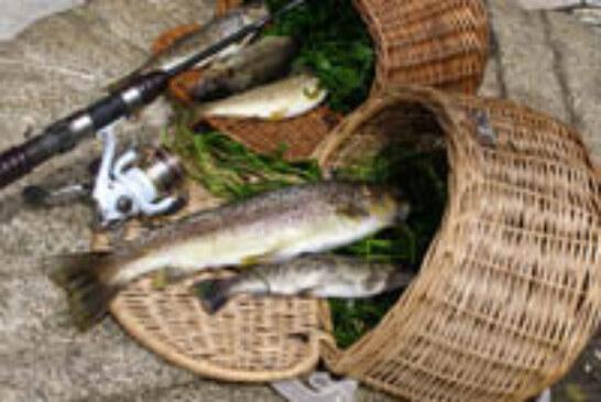 Bizkaia prevé que cerca de 9.000 pescadores participen en la campaña de este año