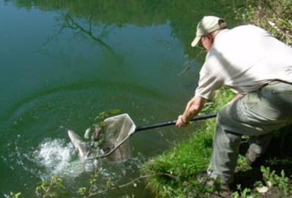El río Oria recibe a los tres primeros salmones de la temporada
