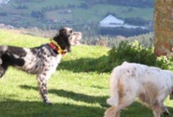II Exhibición de Perros de Muestra a cargo del Club de Caza «Olabarri» de Errigoiti
