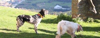 Modificación del calendario de los Campeonatos de Euskadi de San Huberto y Perros de Muestra