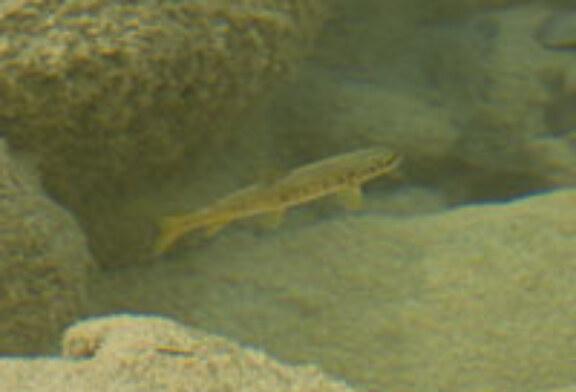 Navarra publica la orden foral por la que se regula la práctica de la pesca durante 2012