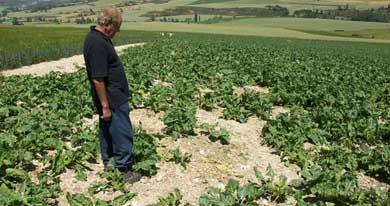 Navarra aprueba ayudas para la prevención de daños cinegéticos por 375.000 euros