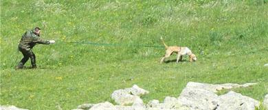 Los perros de Rastro a Trailla de bizkaia se clasifican este domingo en Karrantza