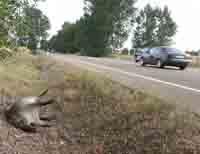 El Gobierno navarro debe pagar 82.536 euros por 24 accidentes causados por animales en 2011