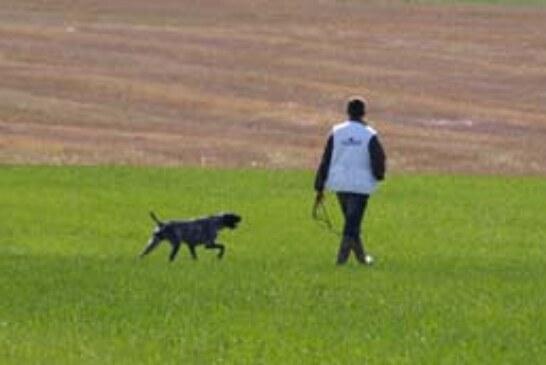 Campeonato autonómico caza práctica con perros británicos y continentales en la Valdorba