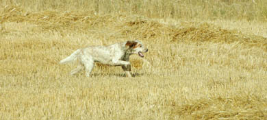 En plena pretemporada canina