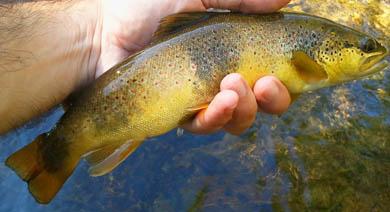 Resumen de una temporada de pesca llena de contrastes