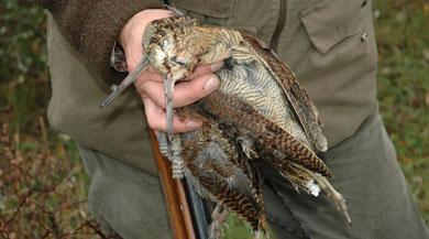 La Federación Navarra pide a los cazadores colaboración para obtener datos sobre la becada