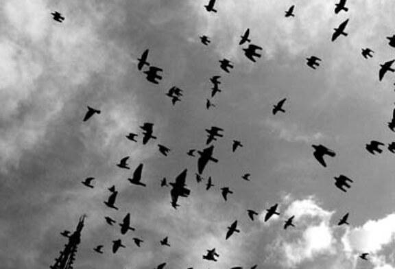La caza virtual de la paloma