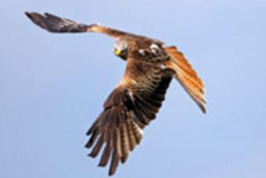 Los observadores del proyecto Lindus identificaron 9.166 aves en los primeros días de octubre