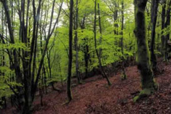 Bizkaia cuenta con su primer manual de buenas prácticas forestales