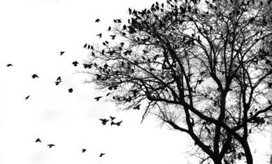 La Diputación desaloja más de 7.000 estorninos de los parques de Santurtzi