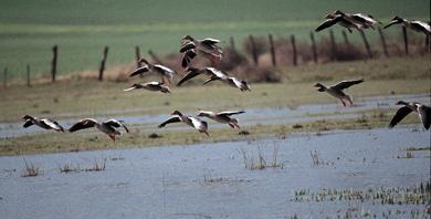 Navarra celebra el Día Mundial de los Humedales con eventos de divulgación ornitológica