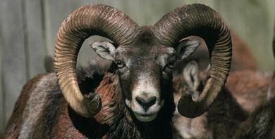 Aclaraciones sobre el Decreto de especies exóticas invasoras y caza
