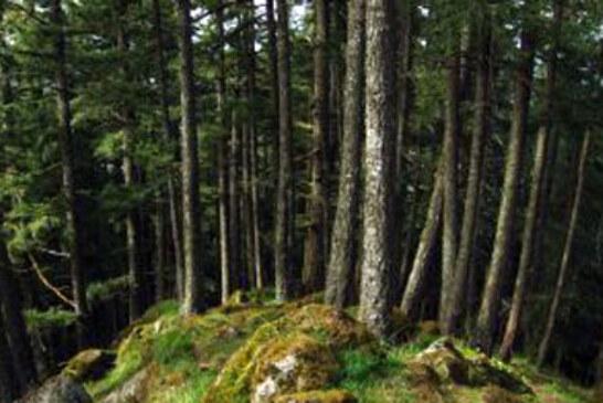 Bizkaia subvenciona medidas para la mejora, conservación y desarrollo de los bosques