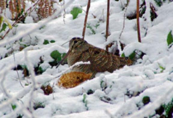La nieve obliga a suspender el Campeonato de Álava de Becadas