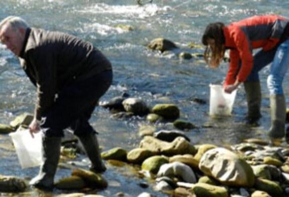 Repueblan con angulas la cuenca del río Urola