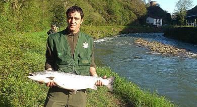 Un ejemplar de 6,540 kilos es el primer salmón capturado en el Bidasoa