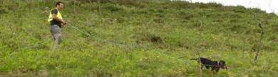 Comienzan las pruebas puntuables para el autonómico cántabro de rastro sobre liebre