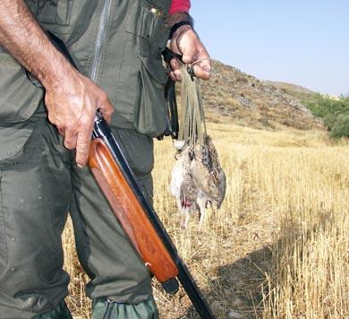 Principales factores para la caza de codornices