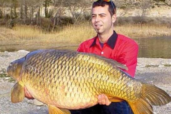 «Carp fishing», la pesca de grandes carpas, modalidad en alza