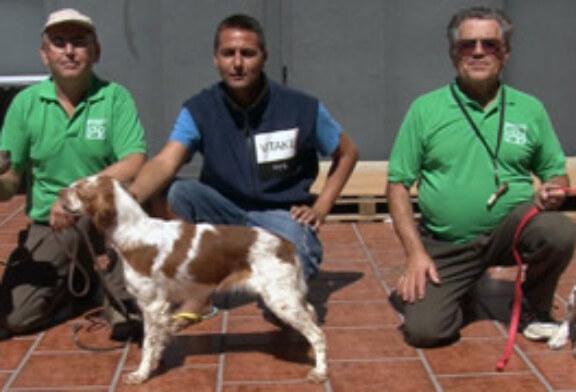 Altísima calidad en los canes participantes en el Campeonato de España de Caza Práctica