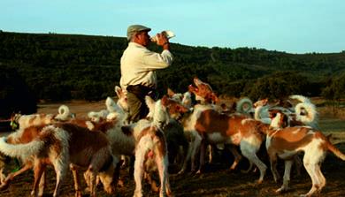 Ávila aguarda la celebración de la IV Feria de Perros de Caza este fin de semana