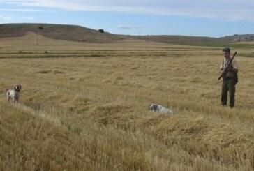 «En la apertura, un pastor levantó ocho codornices en el Gorbea mientras las buscábamos en Castilla y León»