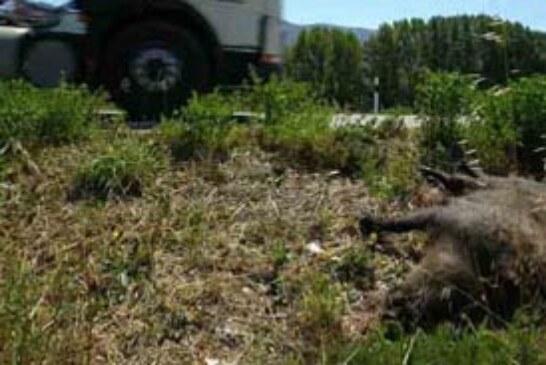 Accidentes de caza: el Estado tramita una modificación