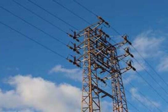 La mejora en tendidos eléctricos reduce un 80% la mortalidad de aves en el Estado