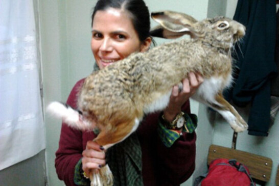 María Asunción capturó en Burgos esta liebre de 7 kilos