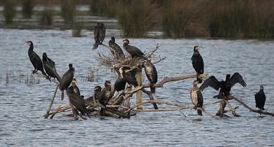 Urdaibai Bird Center organiza un curso de iniciación a la observación de aves acuáticas