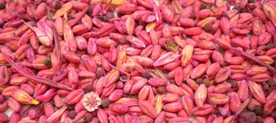 Expertos del IREC publican un estudio sobre el impacto de las semillas blindadas en perdices