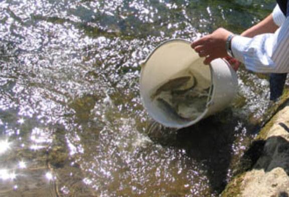 Los pozos de Atxuriaga, La Pesquera, Parkotza y Vinagre finalizan su actividad pesquera