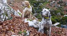 A por la caza de invierno