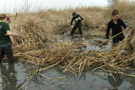 Once asociaciones colaborarán en el programa de voluntariado ambiental PROVOCA 2013