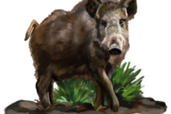 Gipuzkoa amplia el periodo de caza para corzo y jabalí